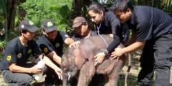 bebe-elephant-orphelin-et-sauveteurs.jpg