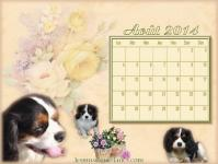 Calendrier aout 2014 chien cavalier king charles