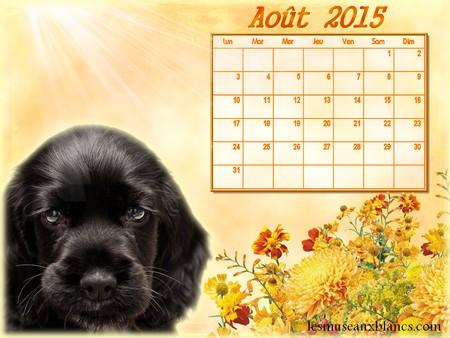Calendrier chien aout 2015