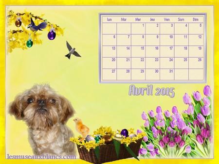 Calendrier chien avril 2015