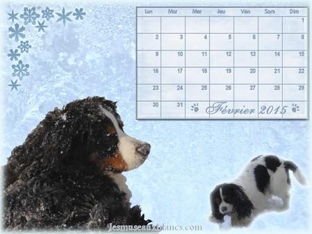 Calendrier chien fevrier 2015