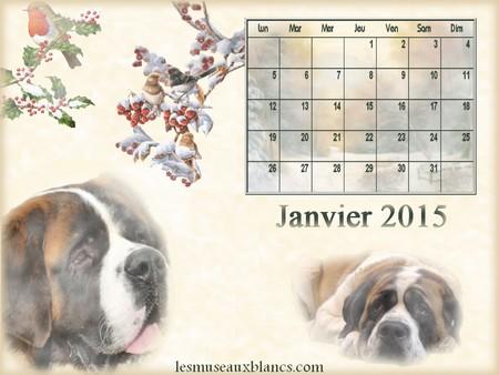 Calendrier chien janvier 2015