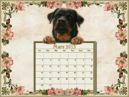 Calendrier chien mars 2015