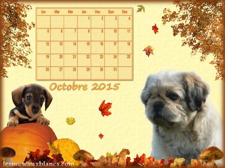 Calendrier chien octobre 2015