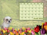 Calendrier chien avril 2014