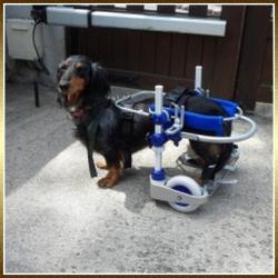 chariot-chien-1.jpg
