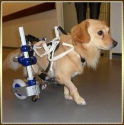 chariot-chien-2.jpg