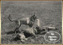 chien-sanitaire-guerre-14-18.jpg