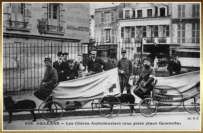 chiens de guerre 1914 1918 photos et images. Black Bedroom Furniture Sets. Home Design Ideas