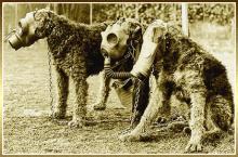 chiens-masque-a-gaz.jpg