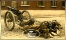 chiens-mitrailleuse-armee-belge.jpg