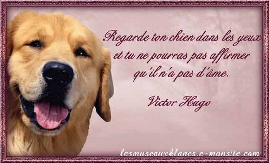 Super Citation sur les chiens de Victor Hugo DI29