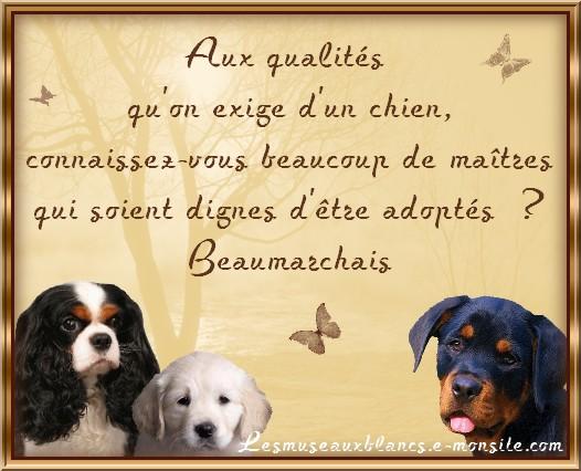 Gut gemocht Citation sur les chiens et l'adoption de Beaumarchais LD82