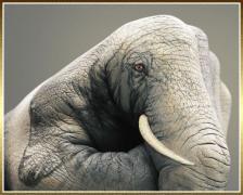 elephant-guido-daniele-main-peinte.jpg