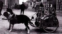 chiens charrette de câbles - livre-de-manfried-rauchensteiner-osterreich-ungarn-und-der-erste-weltkrieg-1.jpg