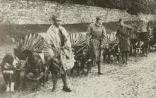 Photo du livre-osterreich-ungarn-und-der-erste-weltkrieg.jpg