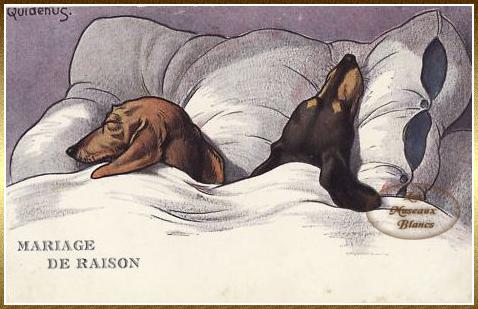 Chiens humanis s carte postale - Dessin teckel ...