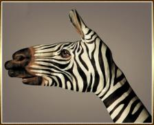 zebre-main-peinte-guido-daniele.jpg
